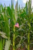 Американское дело кукурузного поля фермы страны Стоковое Изображение