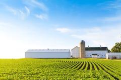 Американское сельскохозяйственне угодье Стоковые Изображения