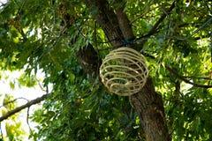лампа на дереве Стоковые Изображения