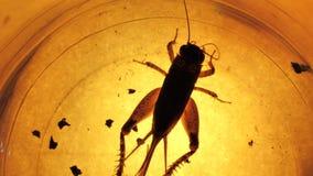 Анализ насекомого видеоматериал