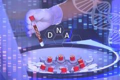 Анализ dnk Рука в медицинской перчатке держит острословие пробирки стоковые фото
