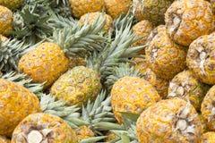 Ананасы в рынке - comosus ананаса стоковое изображение rf