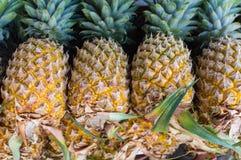 ананасы серии Стоковые Изображения RF
