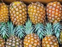ананасы Стоковая Фотография