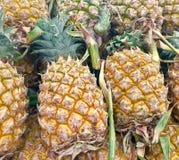 ананас зрелый стоковое изображение