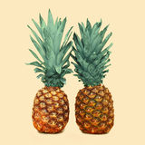 2 ананас на предпосылке, фото ананаса Стоковая Фотография RF