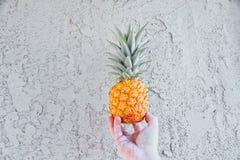 Ананас против стены в руках ` s человека, маленький ананас младенца Стоковое фото RF