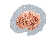 Анатомический полигональный человеческий мозг Стоковые Фотографии RF