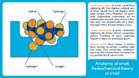 Анатомия запаха Теория Stereochemical запаха иллюстрация вектора