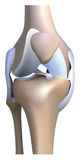 Анатомия колена иллюстрация вектора
