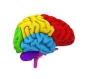 Анатомия человеческого мозга иллюстрация вектора