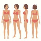 Анатомия человеческого тела, фронт, задняя часть, взгляд со стороны иллюстрация вектора