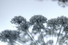 ангела зацветая день field лето sally цветка fireweed сельское Стоковое Изображение RF