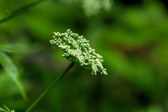 ангела зацветая день field лето sally цветка fireweed сельское Стоковые Изображения RF