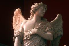 ангеликового стоковые фотографии rf