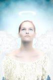 ангеликового стоковые фото