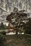 Английская осень в западном Сассекс, Великобритания Стоковое фото RF