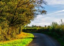 Английская проселочная дорога на солнечный день, сочная зеленая вегетация Стоковые Фотографии RF