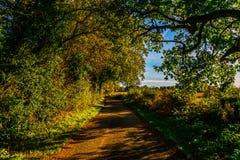 Английская проселочная дорога на солнечный день, сочная зеленая вегетация Стоковая Фотография RF