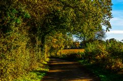 Английская проселочная дорога на солнечный день, сочная зеленая вегетация Стоковые Фото
