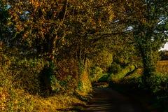 Английская проселочная дорога на солнечный день, сочная зеленая вегетация Стоковые Изображения RF