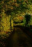 Английская проселочная дорога на солнечный день, сочная зеленая вегетация Стоковые Изображения