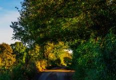 Английская проселочная дорога на солнечный день, сочная зеленая вегетация Стоковое Фото