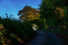 Английская проселочная дорога на солнечный день, сочная зеленая вегетация Стоковое Изображение RF