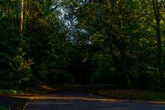 Английская проселочная дорога на солнечный день, сочная зеленая вегетация Стоковое Изображение