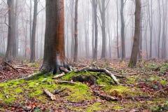 Английские древесины в зиме Стоковое Фото
