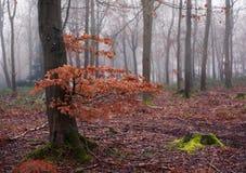 Английские древесины в зиме Стоковое Изображение