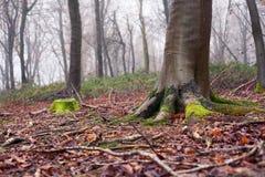 Английские древесины в зиме Стоковая Фотография