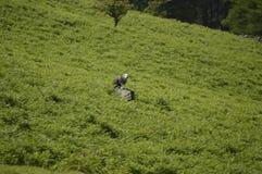 Английские симпатичные природа, парки и живая природа Стоковое Изображение RF