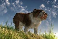 Английский бульдог на травянистом холме бесплатная иллюстрация