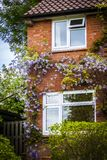 Английский дом кирпича с лозами стоковое фото rf
