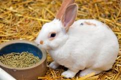 Английский кролик пятна стоковое фото rf