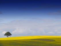 английский ландшафт сельский Стоковое Изображение