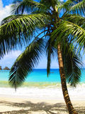 англичанин s Тобаго залива стоковые изображения rf