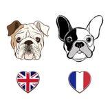 Английская сторона бульдога и сторона французского бульдога с флагами сердца иллюстрация штока
