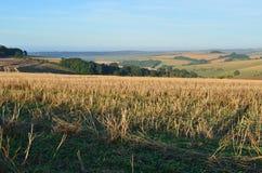 Английские поля урожая Стоковое Изображение RF
