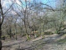 Английские древесины в зиме Стоковое Изображение RF