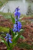Английский сад весны Стоковые Фото