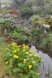 Английский сад весны Стоковое Фото