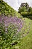 Английский сад страны Стоковые Изображения