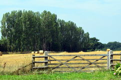 Английское поле сена Стоковая Фотография RF