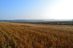 Английское поле сена Стоковые Изображения