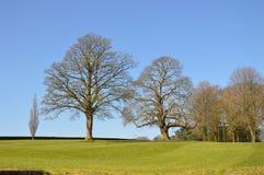 Английское поле с деревьями Стоковые Изображения RF