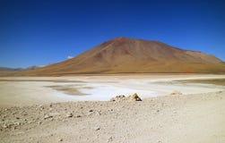 Андийский Fox или Zorro Culpeo идя на берег озера Laguna Verde в Potosi, Боливии, Южной Америке стоковые фото