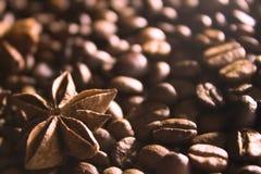 Анисовка звезды на предпосылка кофейных зерен Стоковые Фото