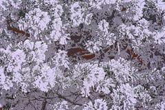 Аннотация Красотка в природе asama бесплатная иллюстрация